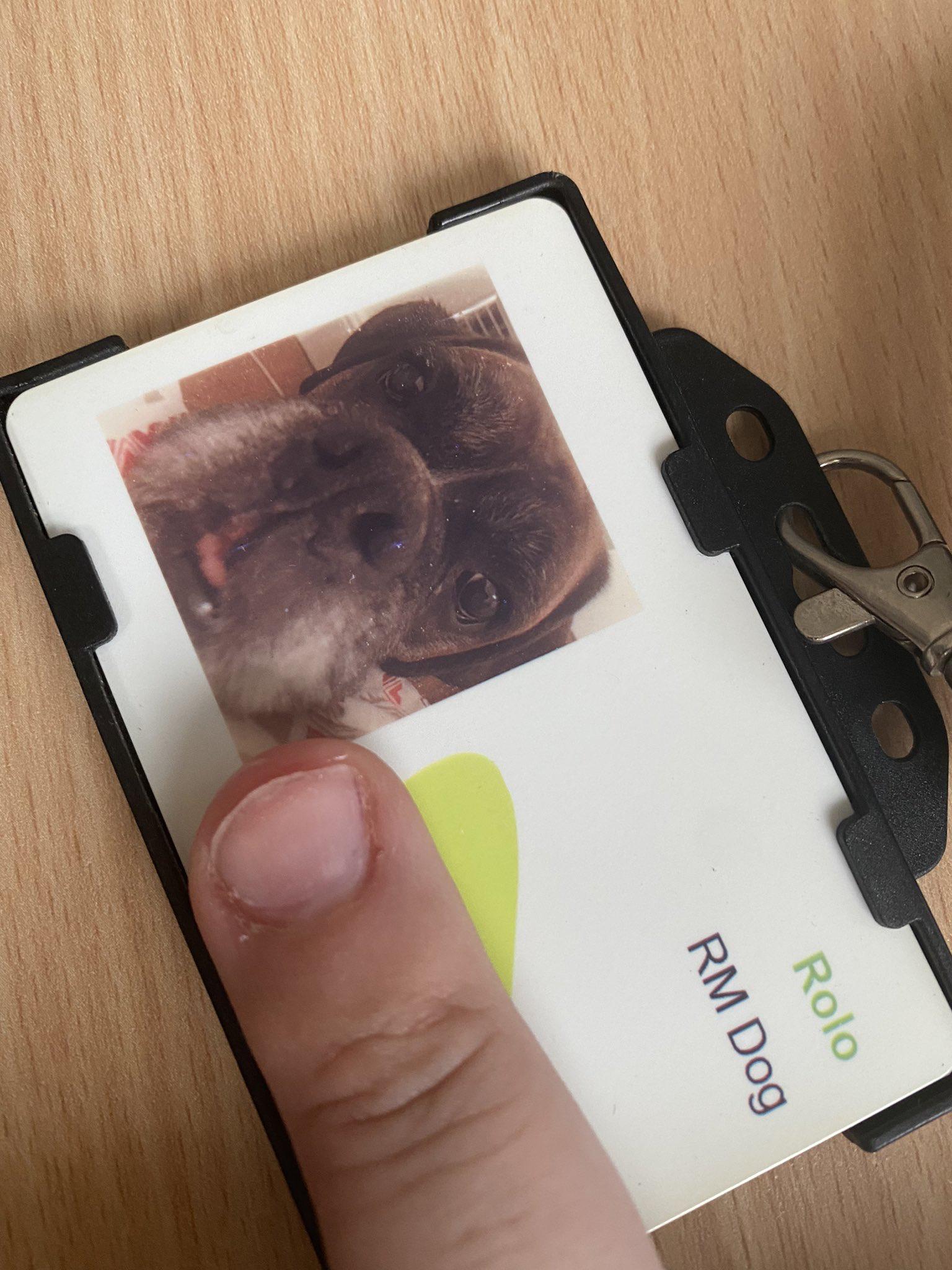 RMDog's Security Badge